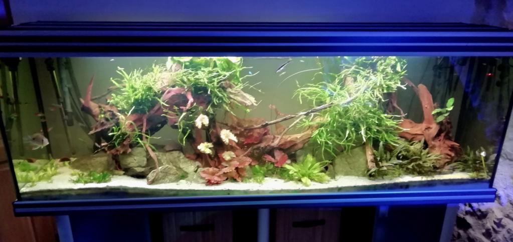 On ne s'ennuis pas en aquariophilie/ aquarium 830 litres  - Page 4 Img_2013