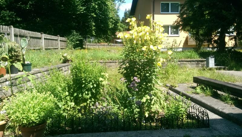 Was alles im Garten blueht Imag0939