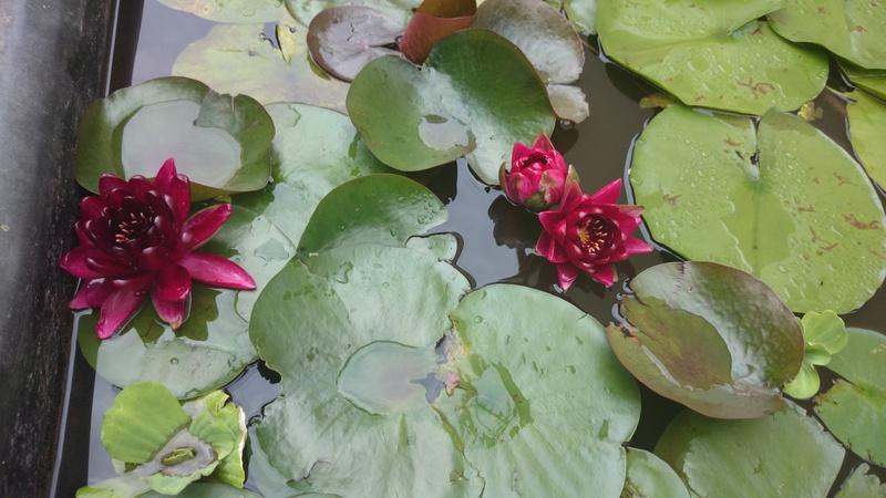 reamenagement de mon bassin de jardin - Page 9 Dsc_0081