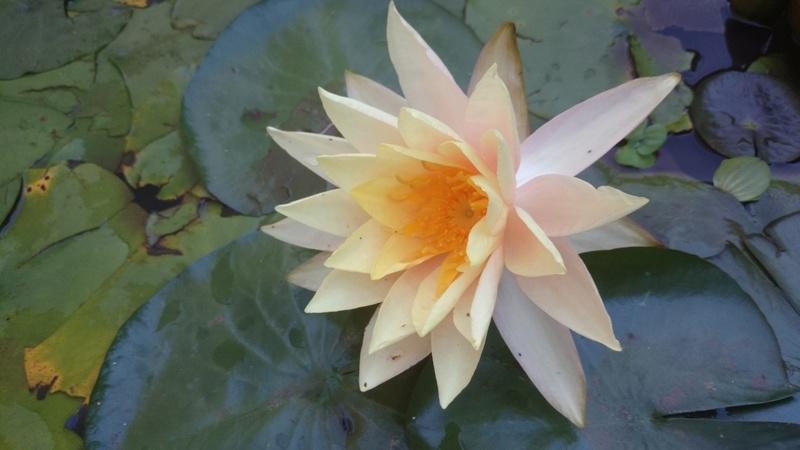 reamenagement de mon bassin de jardin - Page 10 Dsc_0248