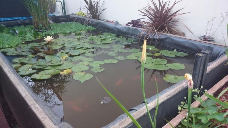 reamenagement de mon bassin de jardin - Page 10 Dsc_0249