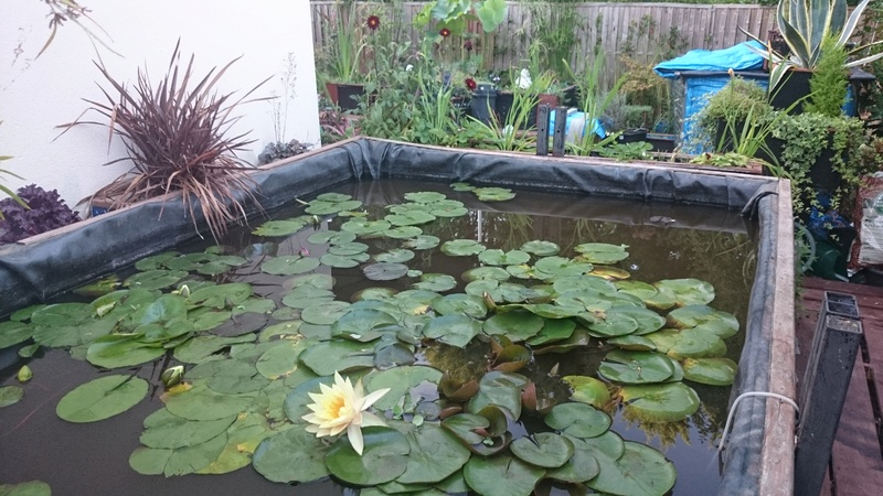 reamenagement de mon bassin de jardin - Page 10 Dsc_0250