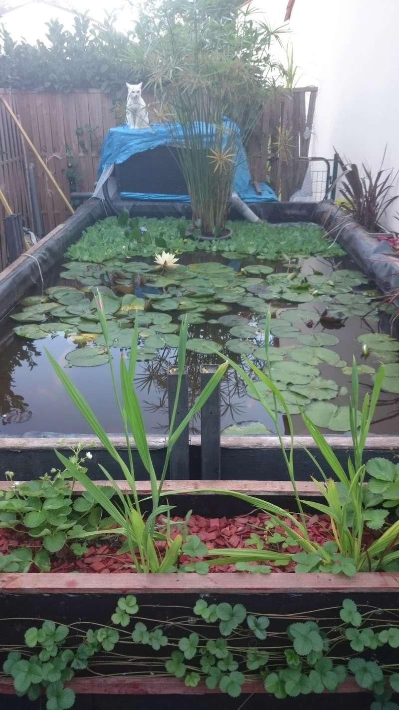 reamenagement de mon bassin de jardin - Page 10 Dsc_0251