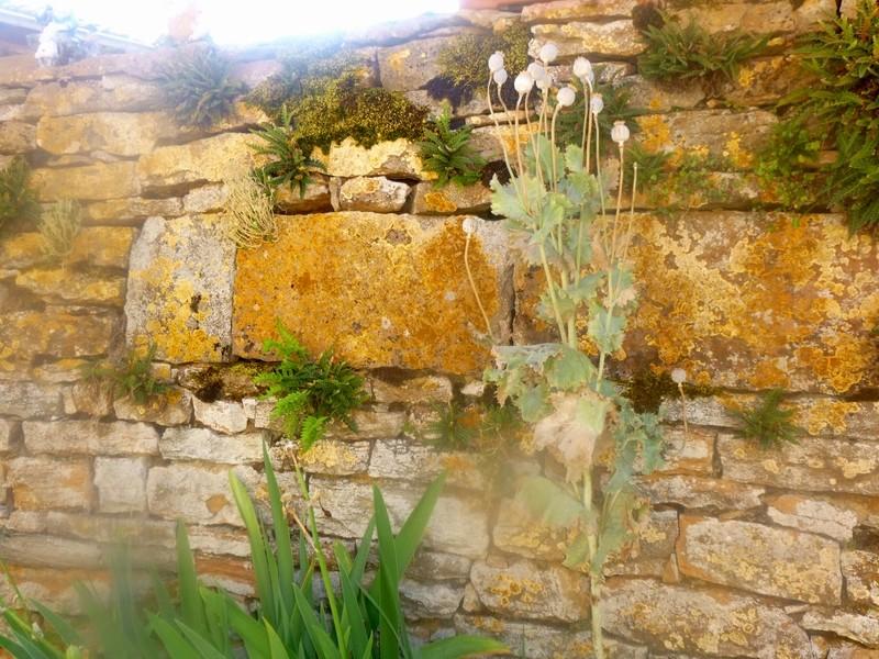 Petit patrimoine de la Chapelle sous Brancion  Collonge C21b_c10