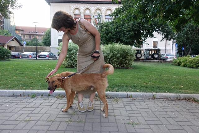 ROCKO -Chien mâle croisé, 25kg env., né en ? (CARMINA) - Réservé via association allemande Img_6114