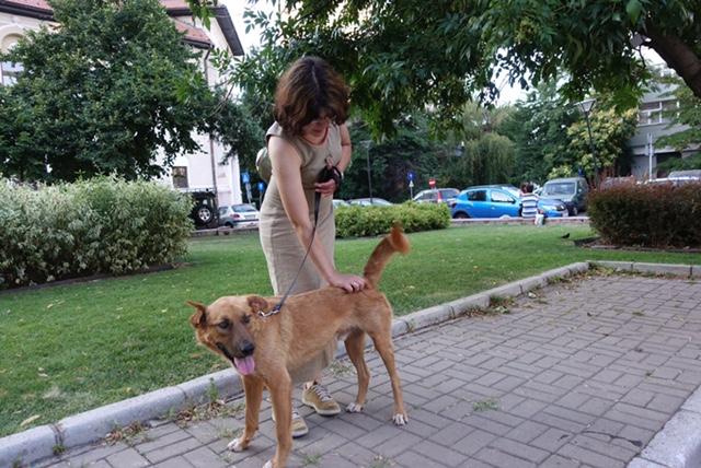 ROCKO -Chien mâle croisé, 25kg env., né en ? (CARMINA) - Réservé via association allemande Img_6116