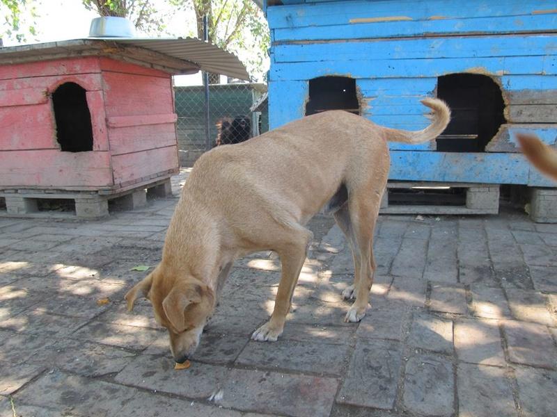 KIMBO - Né 2010 - Timide, il grandit au refuge... - (BELLA) - URGENT : PRET A RENTRER !! - Page 6 07_20134