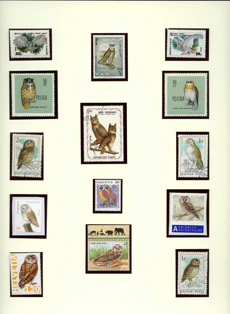 Vögel - Seite 2 Eulenb11