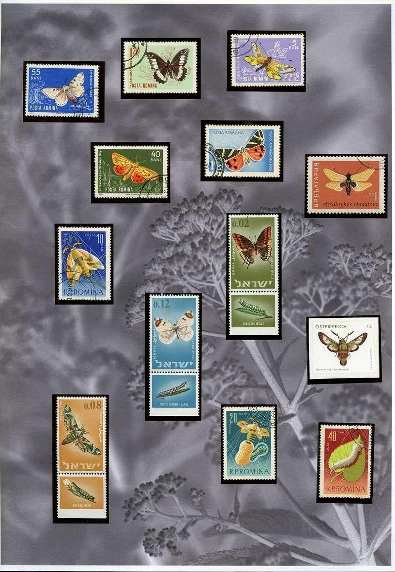 Schmetterlinge und Libellen - Kleine bunte fliegende Juwele Europa11