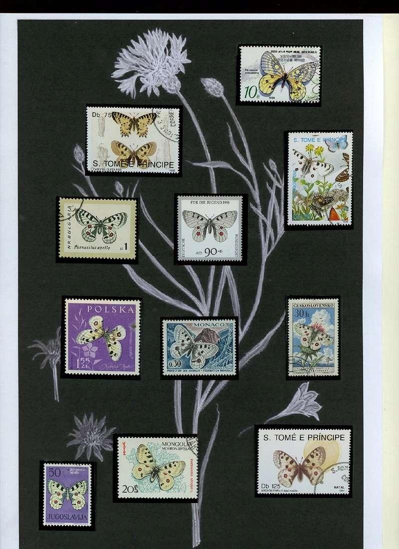 Schmetterlinge und Libellen - Kleine bunte fliegende Juwele Img01911