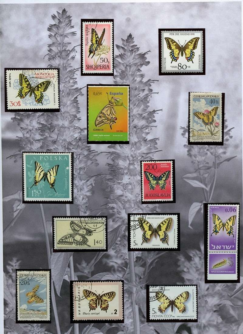 Schmetterlinge und Libellen - Kleine bunte fliegende Juwele Img04111