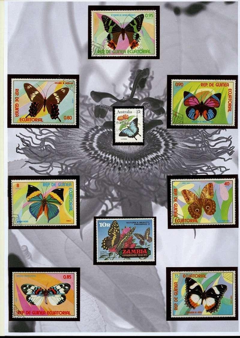 Schmetterlinge und Libellen - Kleine bunte fliegende Juwele Img04216