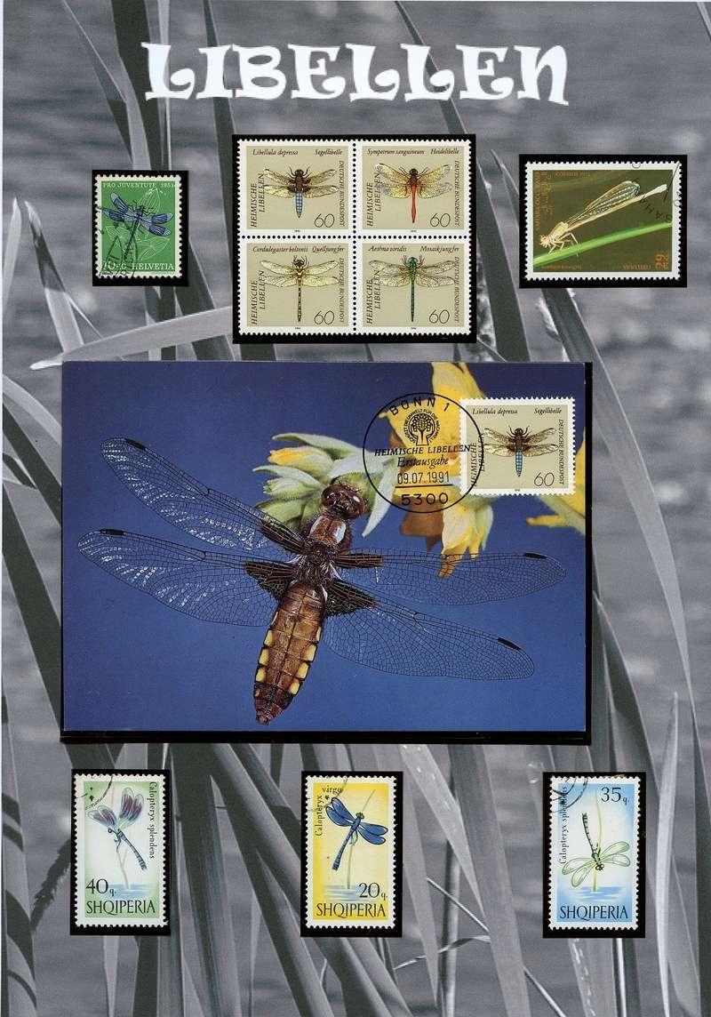 Schmetterlinge und Libellen - Kleine bunte fliegende Juwele Libell10