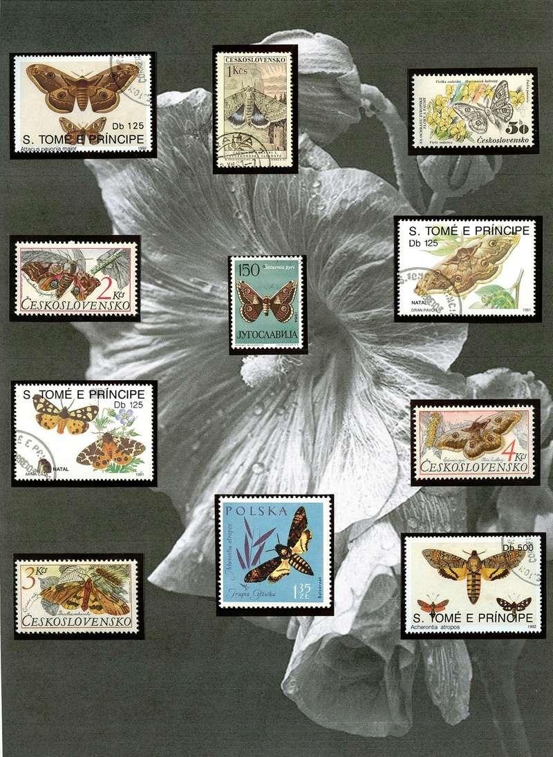 Schmetterlinge und Libellen - Kleine bunte fliegende Juwele Nachts10