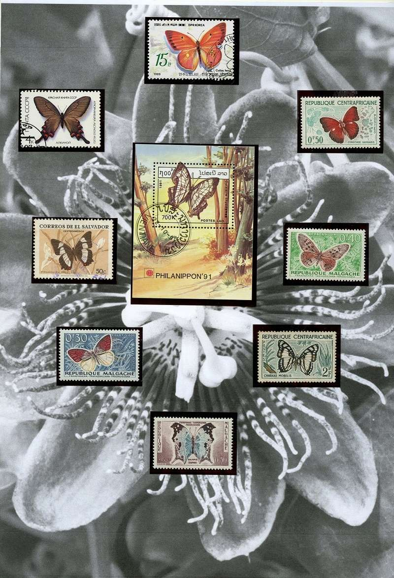 Schmetterlinge und Libellen - Kleine bunte fliegende Juwele Tropic11