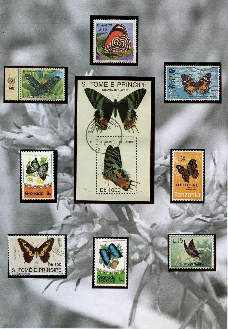 Schmetterlinge und Libellen - Kleine bunte fliegende Juwele Tropic12