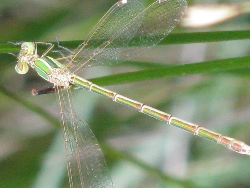 Reprise de biodiversité à Morboul 1-07-17 Img_7410