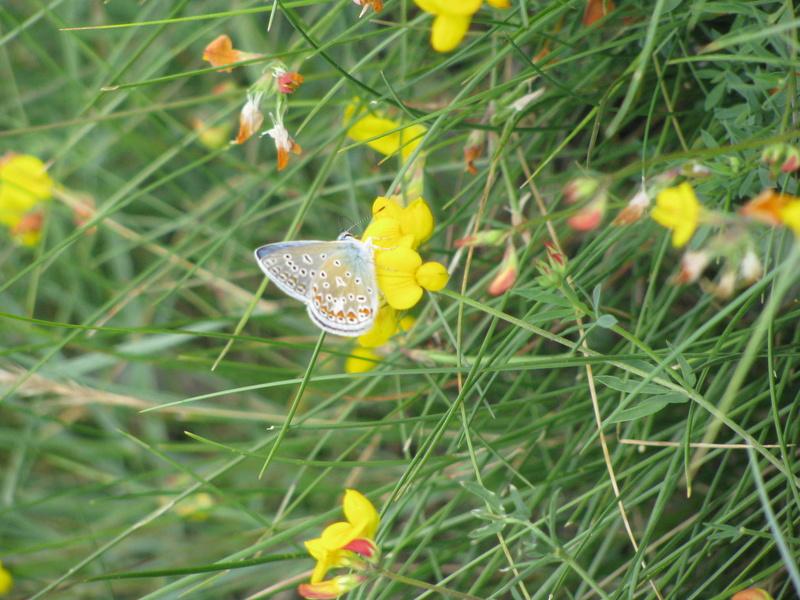 Reprise de biodiversité à Morboul 1-07-17 Img_7411
