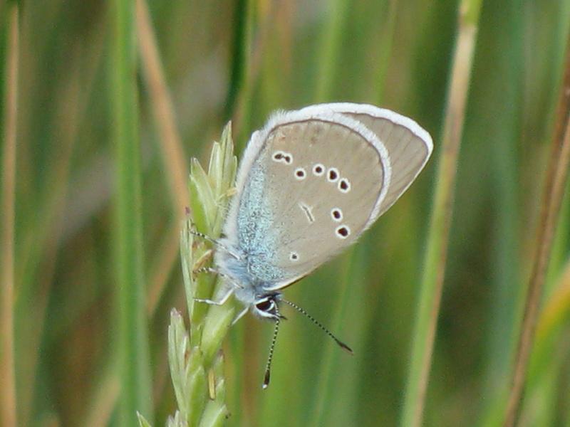 Reprise de biodiversité à Morboul 1-07-17 Img_7514
