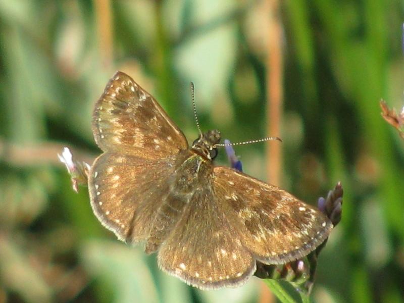 Reprise de biodiversité à Morboul 1-07-17 Img_7515