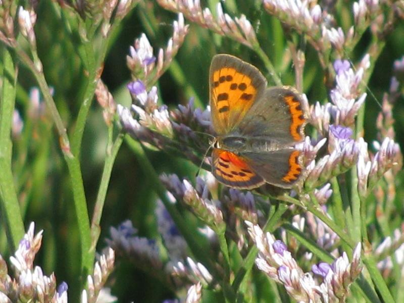 Reprise de biodiversité à Morboul 1-07-17 Img_7516