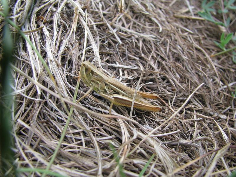 Reprise de biodiversité à Morboul 1-07-17 Img_7517
