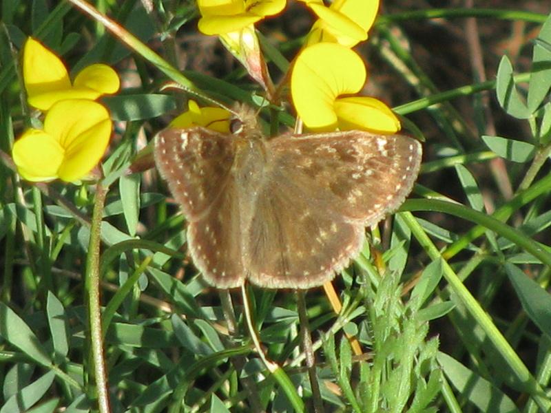 Reprise de biodiversité à Morboul 1-07-17 Img_7518