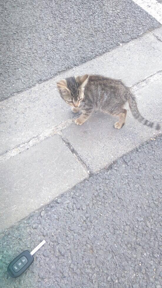 Lilou, adorable chatonne tigrée abandonnée 20793510