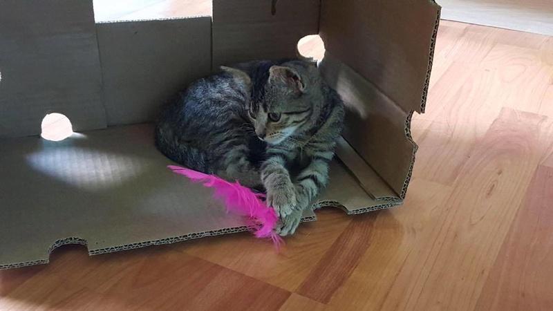 Lilou, adorable chatonne tigrée abandonnée 21284410