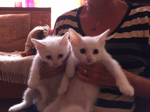 Femelles jumelles - Blanche Img_4253