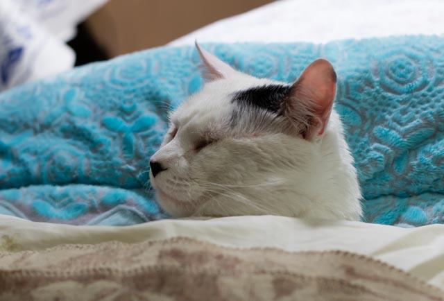 Всемирный День Кошек 039a0111