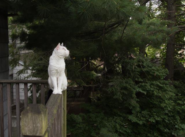 Всемирный День Кошек Img_7015