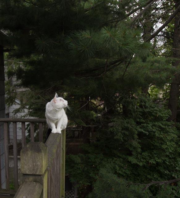 Всемирный День Кошек Img_7016