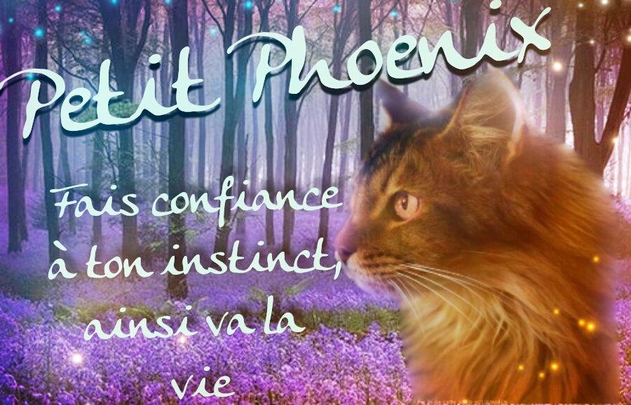 Petit Lilas D8r210