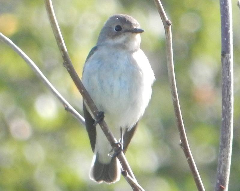 Un joli oiseau timide Jardin10