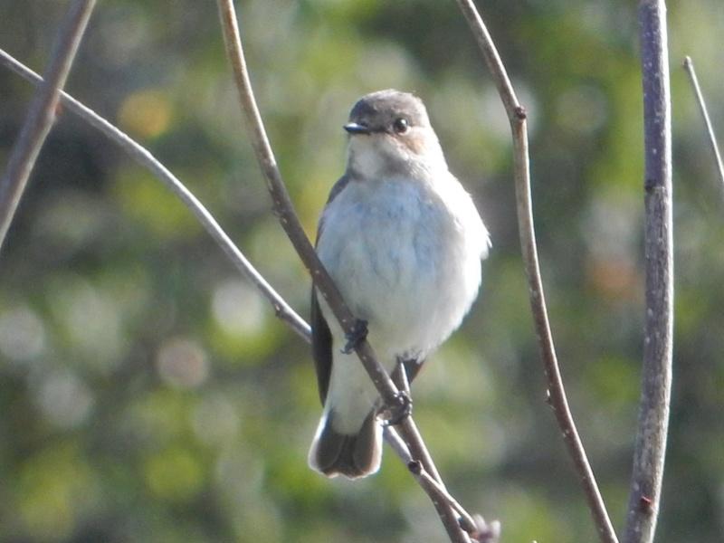 Un joli oiseau timide Jardin11