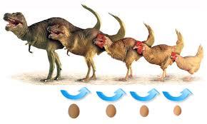 L'évolution de la poule Ancytr10