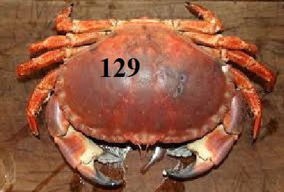 PRISONNIERS (4) - Du jeudi 14 au mardi 20/12/2011 Crabe11
