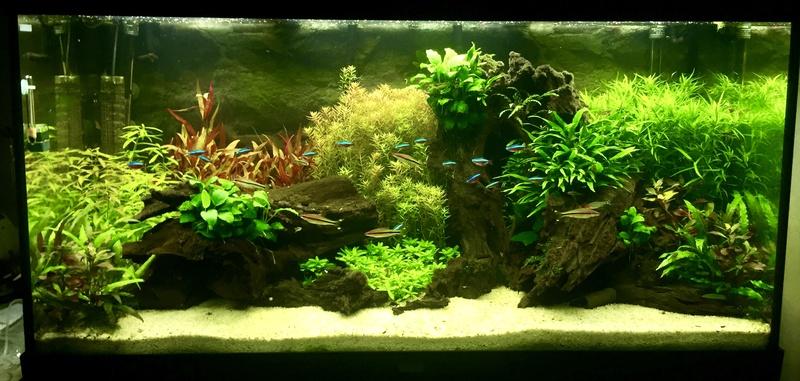 Aquarium juwel rio 300 - Page 3 Fullsi19