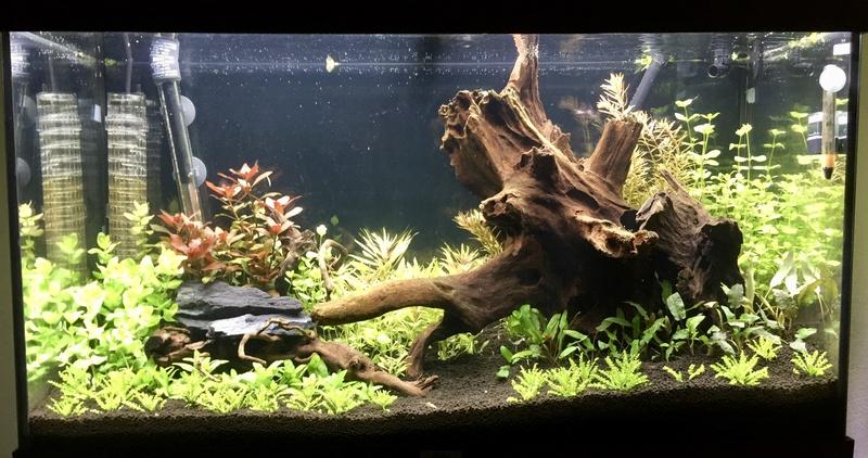 aquarium juwel 120L Fullsi20