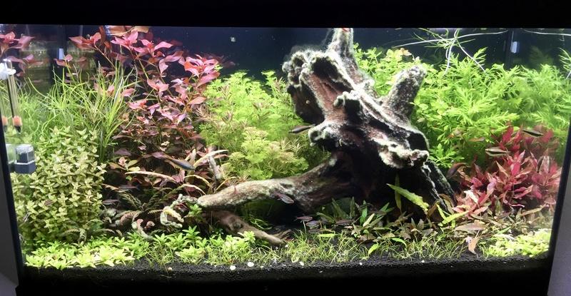 aquarium juwel 120L Fullsi21
