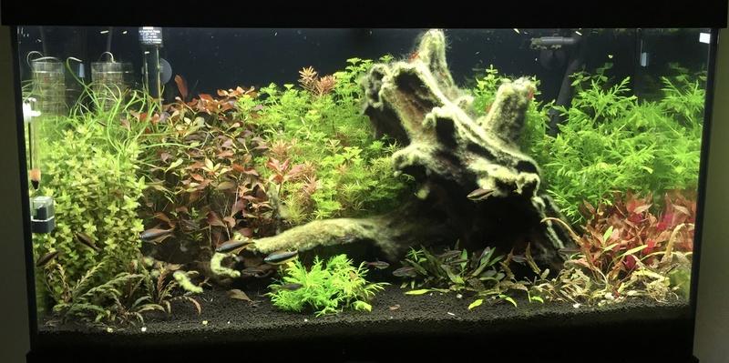 aquarium juwel 120L Fullsi28