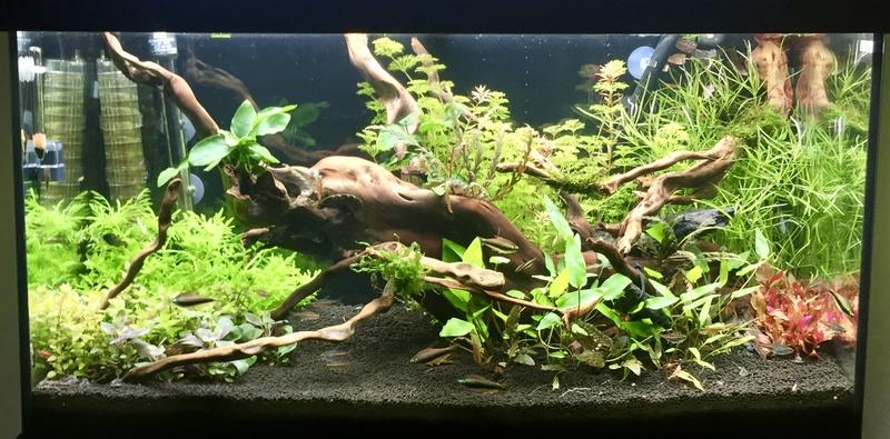 aquarium juwel 120L Fullsi31