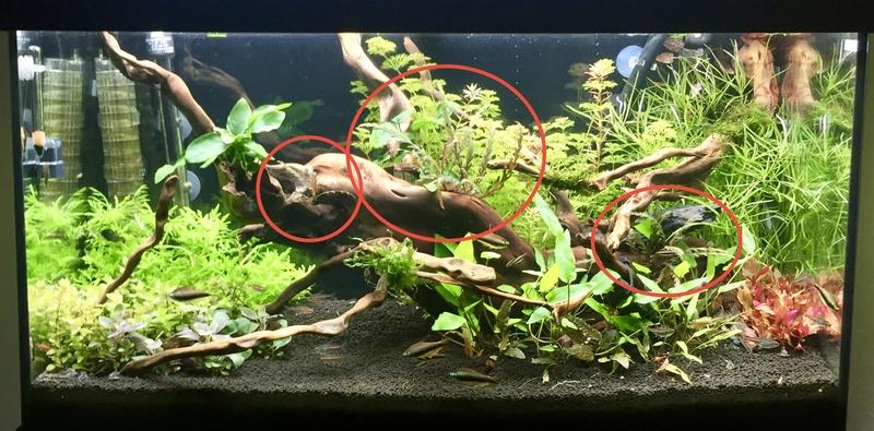 aquarium juwel 120L Fullsi32