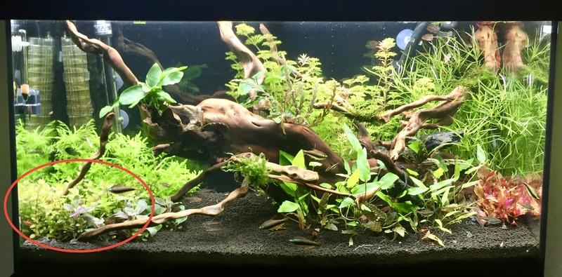aquarium juwel 120L Fullsi33
