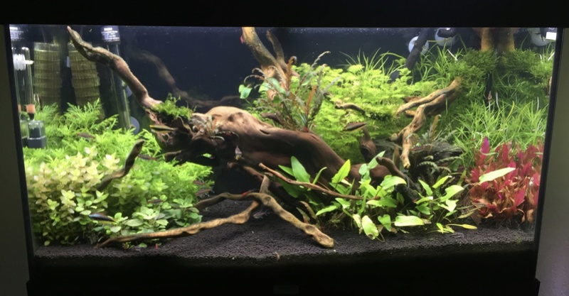 aquarium juwel 120L Fullsi36