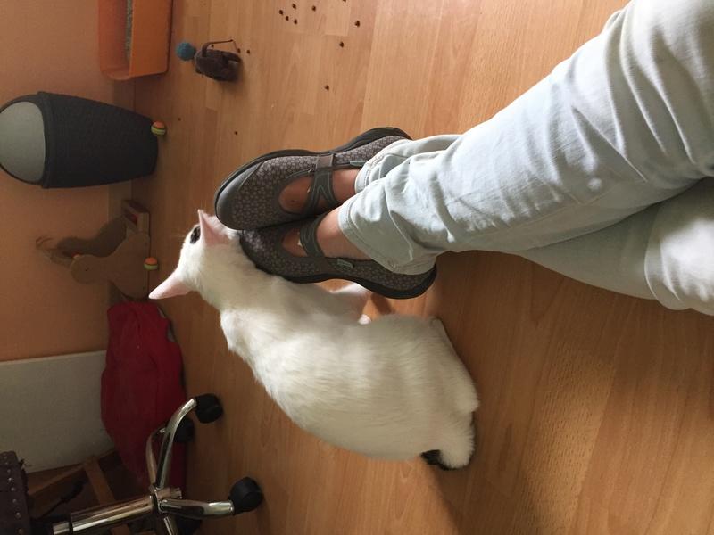 lois - Loïs - chatte blanche et noire - née en mai 2016 Img_7222