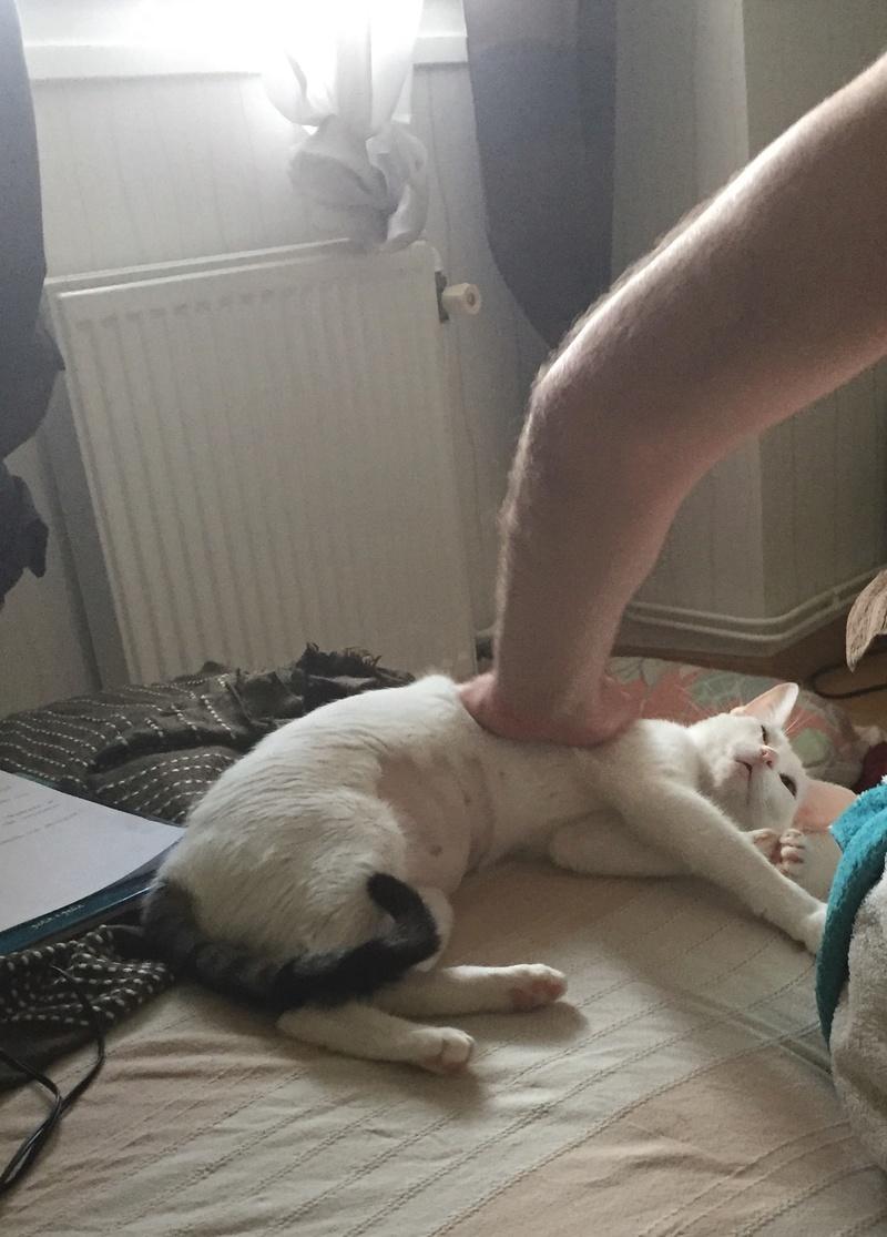 lois - Loïs - chatte blanche et noire - née en mai 2016 Img_7612