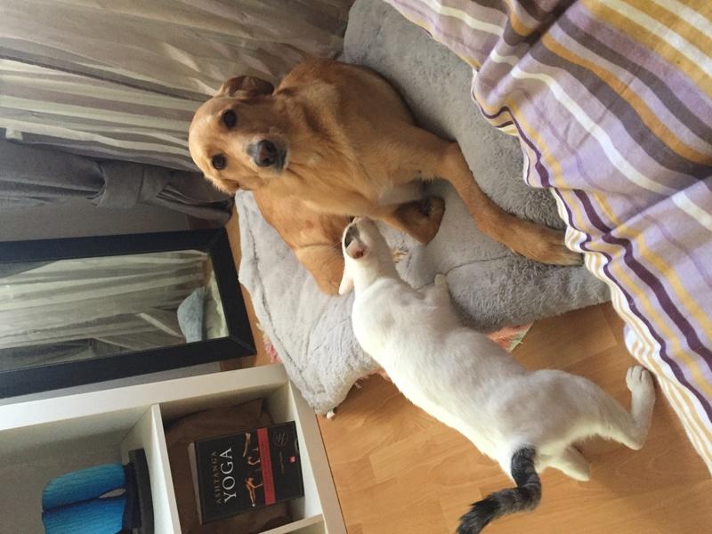 lois - Loïs - chatte blanche et noire - née en mai 2016 Img_8212