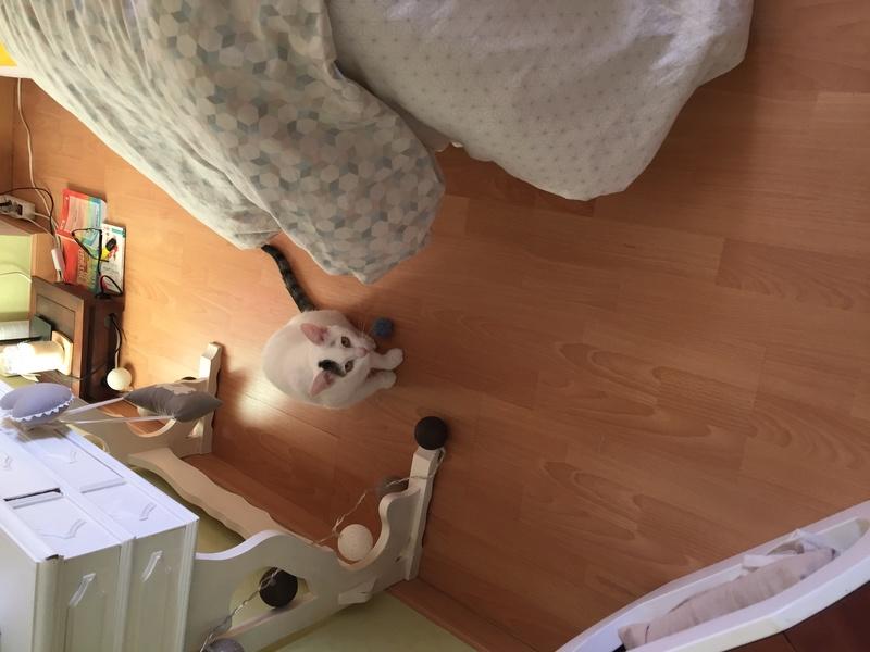 lois - Loïs - chatte blanche et noire - née en mai 2016 Img_8218